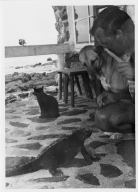 Marine Iguana, Black Cat, Dog, and unidentified man