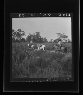 Pack horses near Descalvados