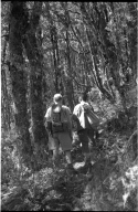 Field team members roaming the forest at Lewis Pass