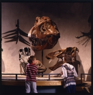 Prehistoric Journey Exhihibit