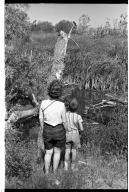Baileys and Tree Swallow