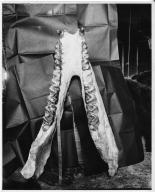 Titanotherium robustum mandible