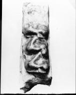 Tanyorhinus blairi teeth