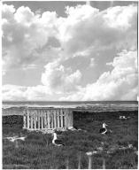 Grave and nesting albatrosses