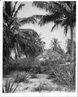 A Bahamian home