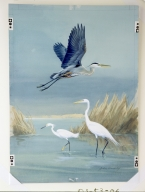 Great Blue Heron, Snowy Egret, and Common Egret