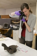 Photographing a vertebra from Snomastadon Excavation