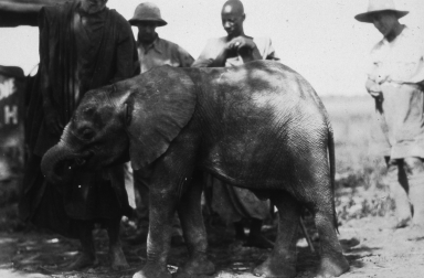 P. Hoefler Collection of the Colorado African Expeditions