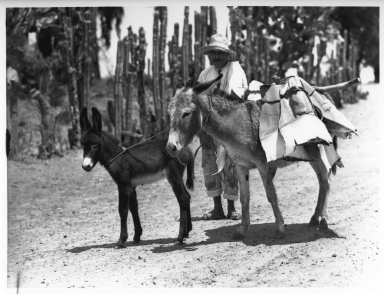 Paul Hoefler Collection- Mexico Expedition