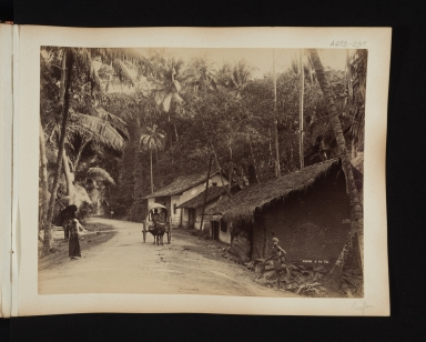 Village scene with bullock cart in Sri Lanka.