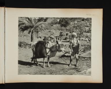 Bhisti and bullock in India.