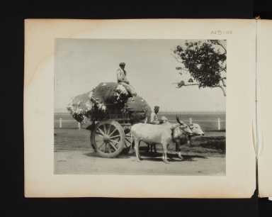 Cart loaded with cotton.