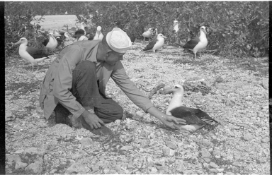 Fieldwork on Midway Islands