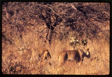 Botswana Fieldwork