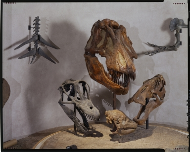 Dinosaur fossils at Prehistoric Journey Exhibit