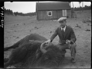 Albert C. Rogers with a male bison