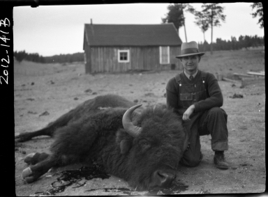 Unidentified male with a male bison