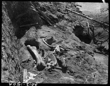 Mammoth bones in situ