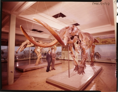 Old Fossil Mammal Hall Exhibit