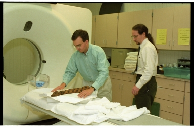 CT scanning cat mummy