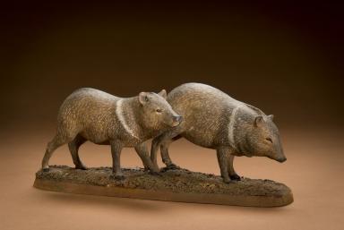 Peccary, aka javelina or skunk pig