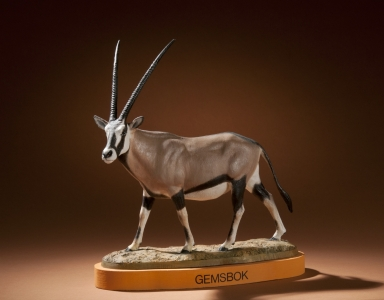 Gemsbok