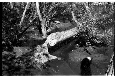 Beaver Cutting