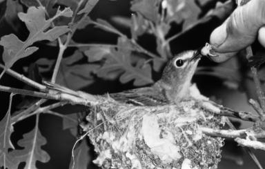 Patricia Bailey Witherspoon feeding a bird