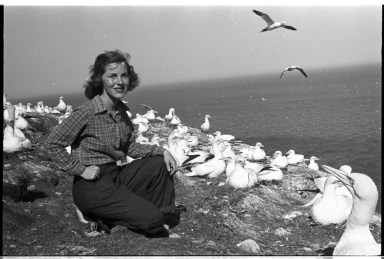 Fieldtrip to study gannets for new exhibit Bonaventure Island