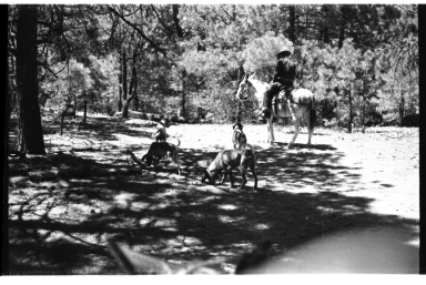 Crell Lee with Hunting Dogs
