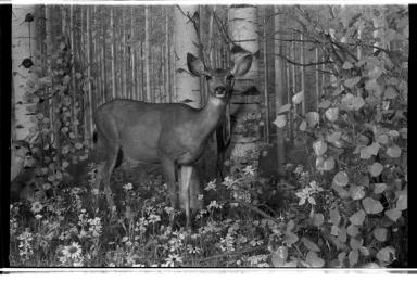 Summer Deer Group Diorama