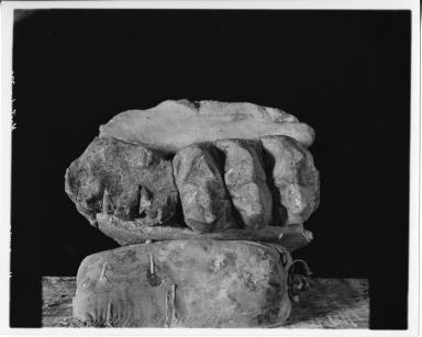 Mastodon molars