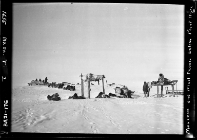 Museum and post office sled teams alongside sled dogs near Point Hope, Alaska