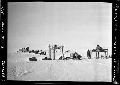 Museum and post office sled teams alongside sled dogs near Point Hope, Alaska
