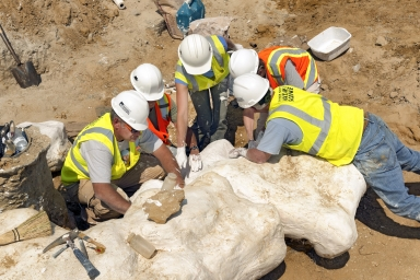 Thornton Torosaurus Excavation