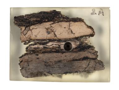 Claystone specimen