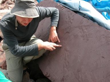 Sebastian Voigt  at Ichniotherium slab