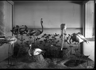 Old Flamingo Group