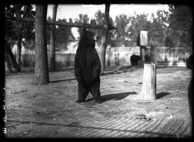 Black bears at the Zoo