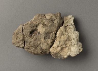 Navajosuchus skull