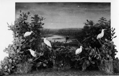 Ivory Heron Group