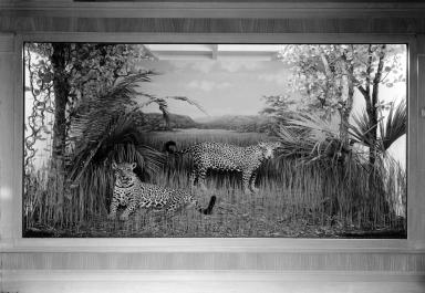 Matto Grosso Jaguar Group