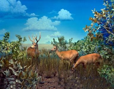 Marsh Deer Group