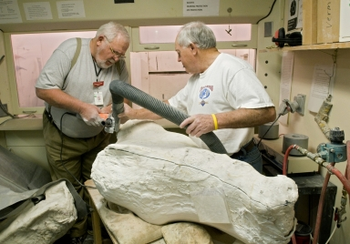 Working in Paleo Lab on Bison Skull from Snomastadon Excavation