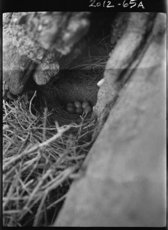 Magpie nest
