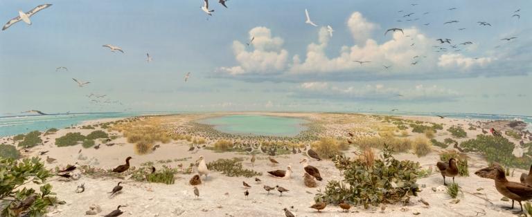 Laysan Island diorama