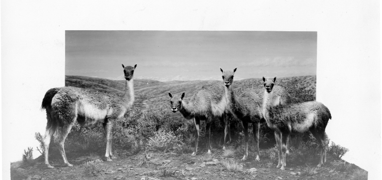 Guanaco Group