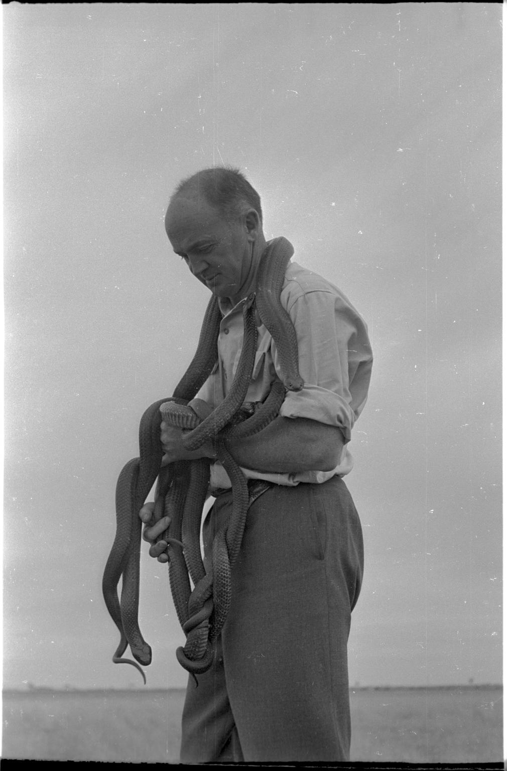 Charles Brazenor with black tiger snakes
