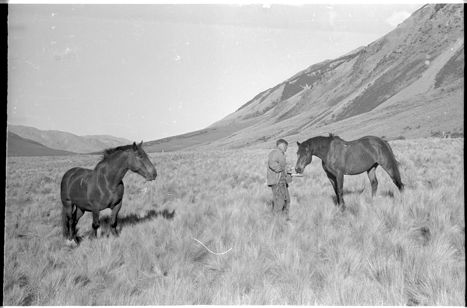 Dick Morris and two horses at Lewis Pass