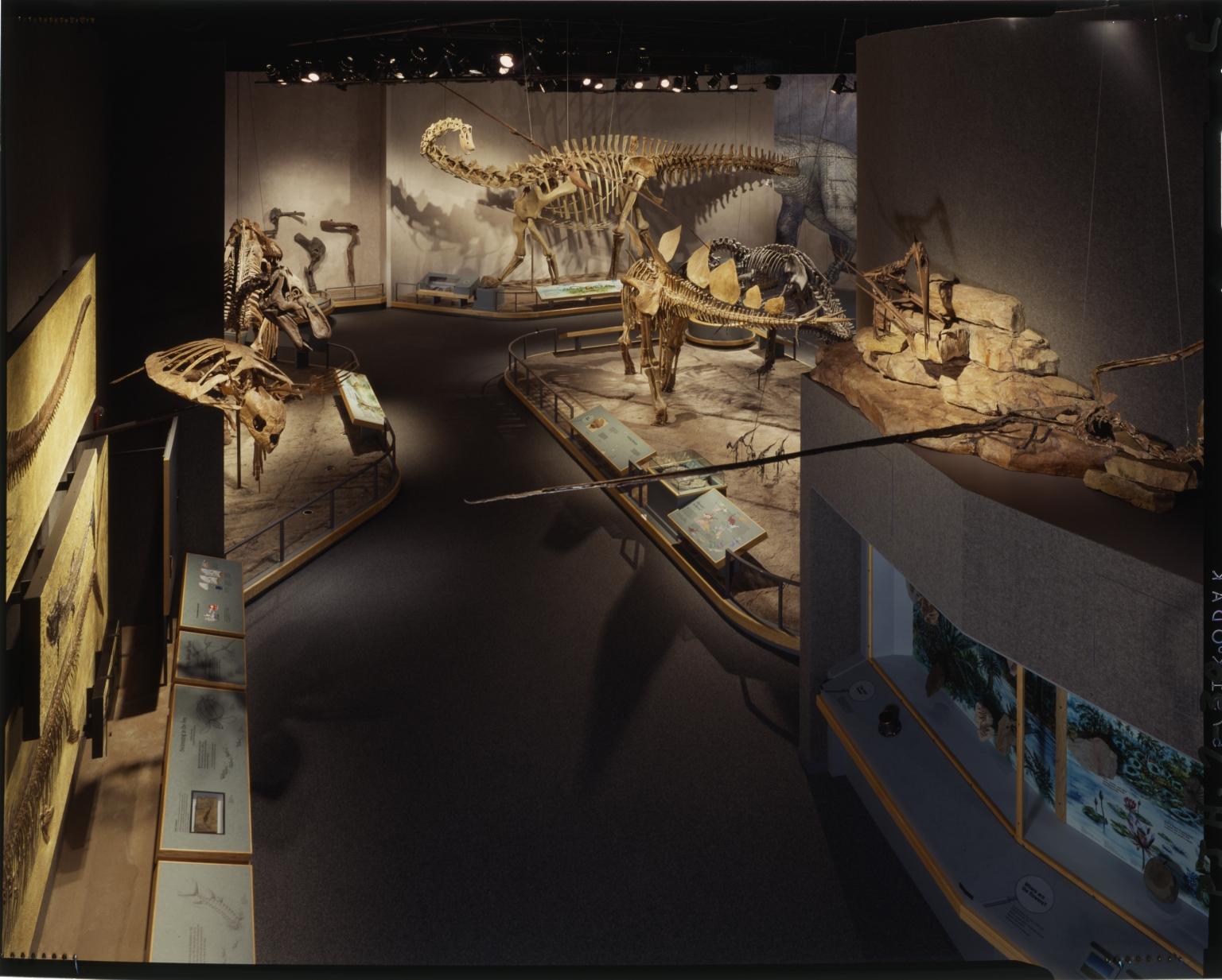 Prehistoric Journey Exhibit
